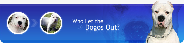 Dogo.com is a site by and for Dogo lovers! Here, you'll find lots of useful information about this powerful breed, as well as a Photo Gallery, contact information to Dogo Breeders, Dogo Rescue Organizations and more.